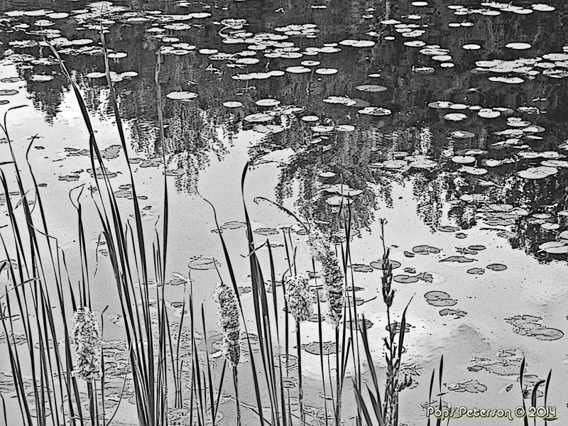 Reeds and Lilypads-bw