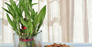 Bamboo and Dry Fruits Combo