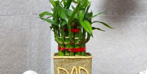 The DAD Bamboo
