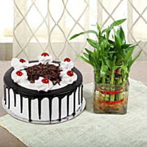 Black Forest Cake and Bamboo Combo