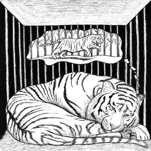 Caged Stripes