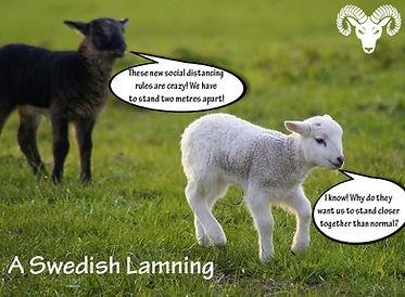 Swedish-Lamning-new.jpg