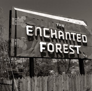 [Dis]enchanted Forest