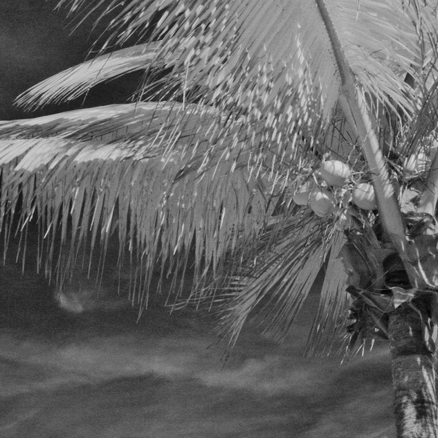 Coco Cay Coconuts