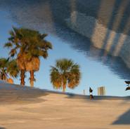 Parking Lot Palms