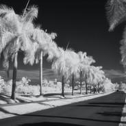 Dorado Del Mar Boulevard
