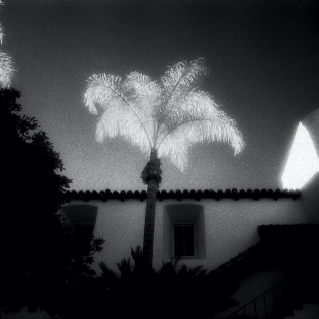 Santa Barbara Palms