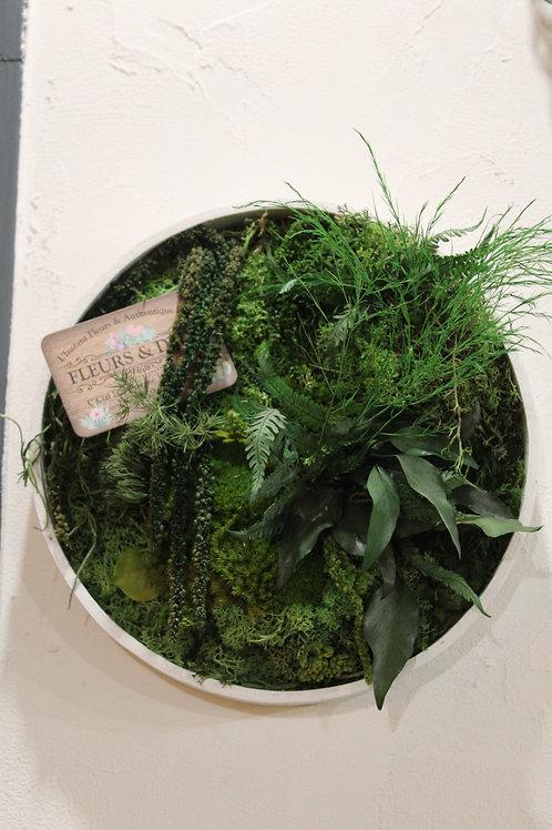 Cadre végétal stabilisé VII