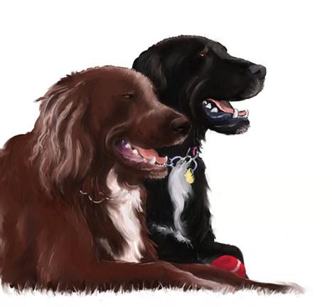 thaxs-dogs.jpg