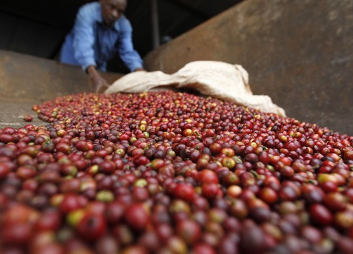 The Story of Kaffa: The Origins of Coffee