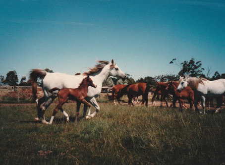 Ways Horses Can Improve Your Health
