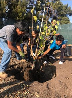 treeplanting_edited