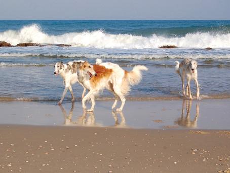 כלבי רוח רוסים - אסיאתיים