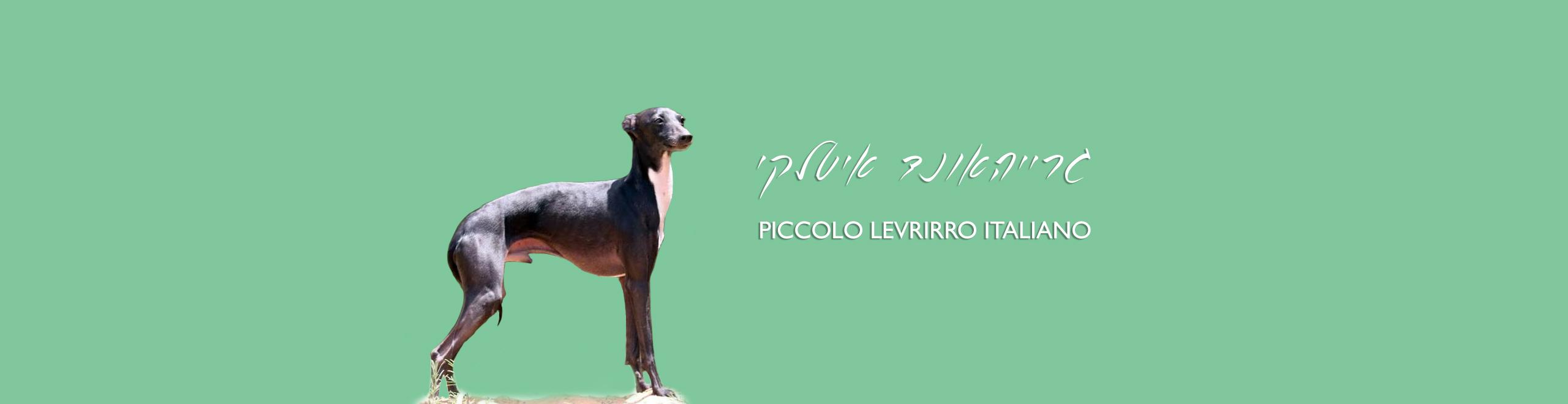 PICCOLO-LEVRIRRO-ITALIANO