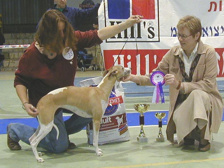 הוויפט – כלב לכל אחד