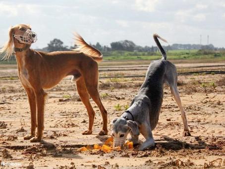 על ריצות שדה וריצות כלבים תחרותיות