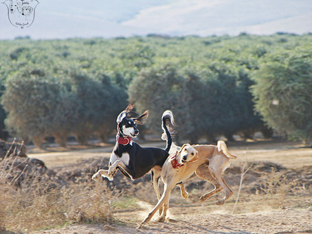 סאלוקים בישראל – עדכון 2011