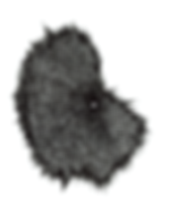 Sahraeian_Magnetic growth No02.png