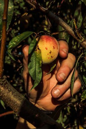 Fruit du jardin du restaurant l'Aromatic - proche de Saint-Brieuc