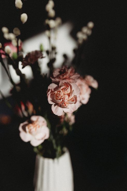 Pink carnation in lights
