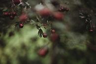 freelensed berries-2.jpg