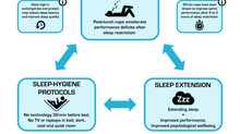 Sleep Strategies for Team-Sport Athletes after Sleep Loss
