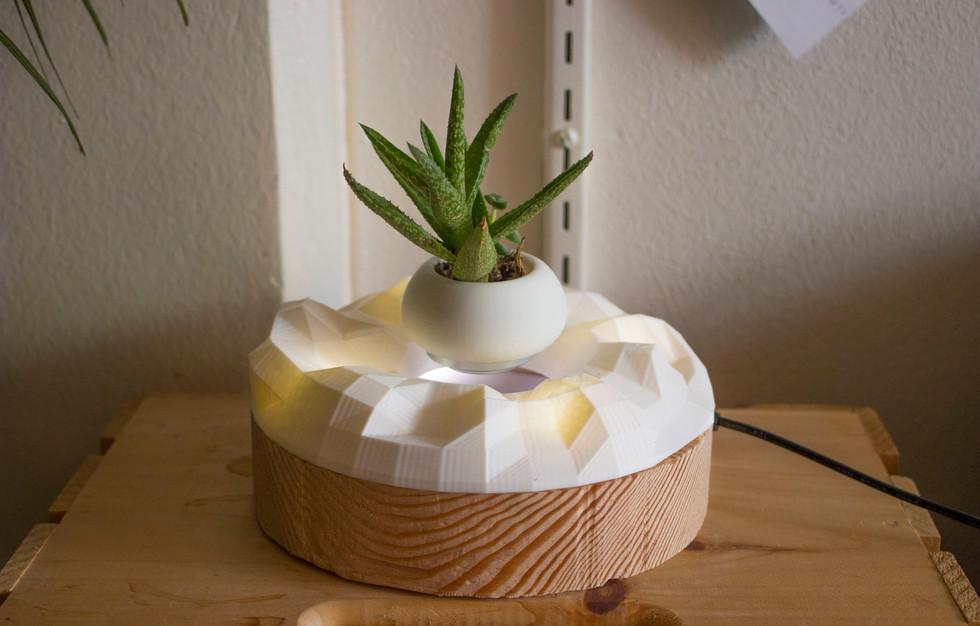 Levitating Succulent Plant