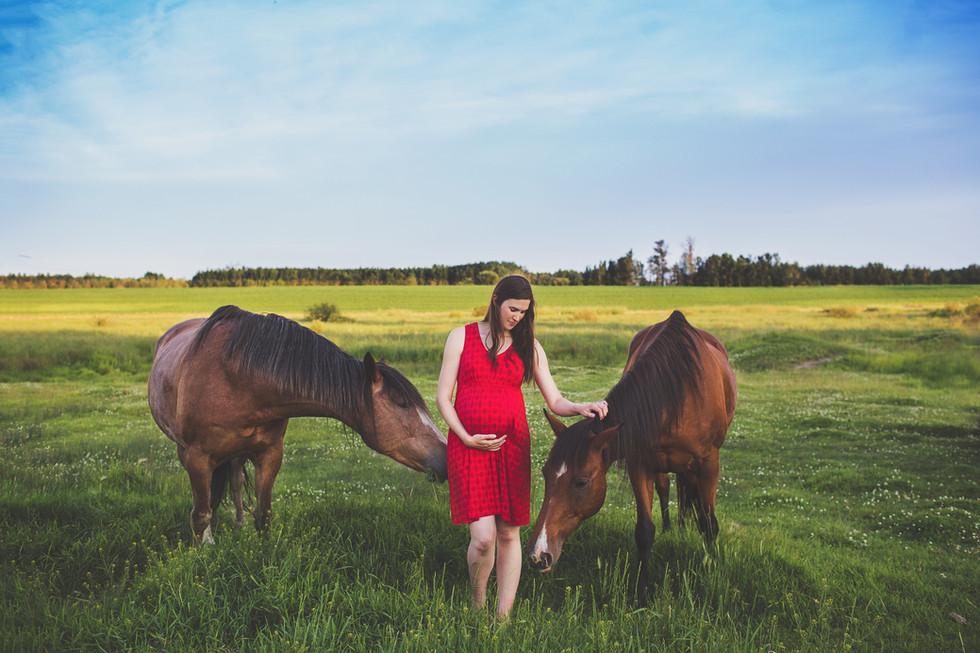 edmonton-photographer-maternity-horses.j