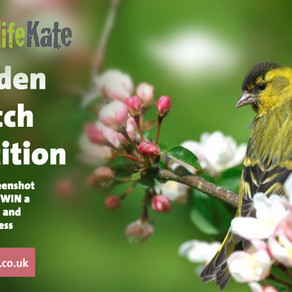 Win a Manhattan Bird Table & 20kg of Seed!