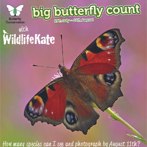 Big Butterfly Count 2019