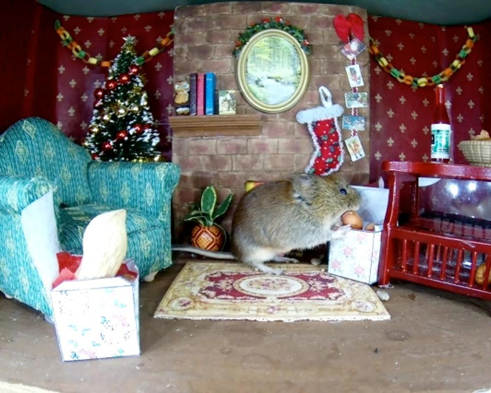 Christmas Vole1_00002