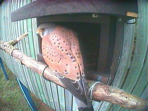 Kestrel Update
