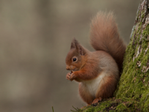 Cairngorms 2014: Day 7