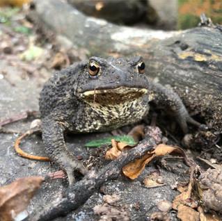 Cricket & Toad Visitors