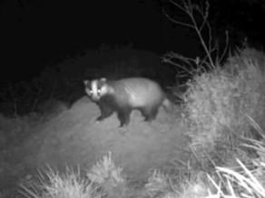 Bushnell Badger Success