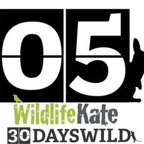#30DaysWild – Day 5  When a plan comes together…..