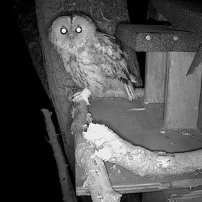The New External Tawny Cam is Looking Good!
