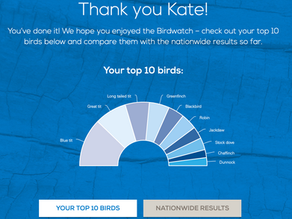 My RSPB Big Garden Birdwatch 2020