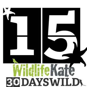 #30DaysWild – Day 15   Ten Days in Glorious Shetland!