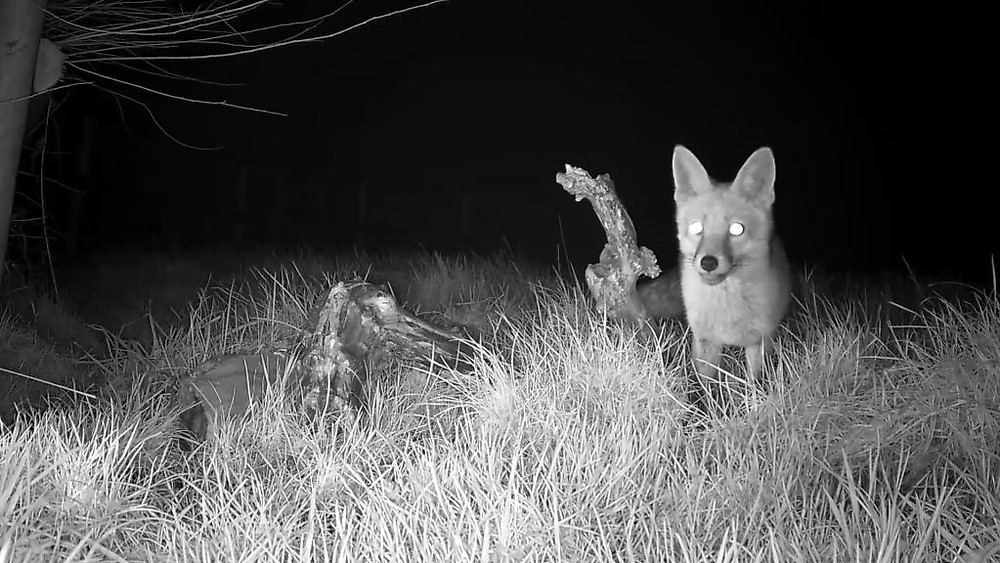 vivotek-fox-cam-2016-12-26-20-02-37-665