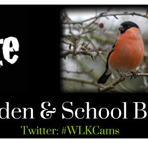 Getting ready for Big Garden and Big Schools' Birdwatch