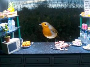New WildlifeKate Bird Snack Bar goes online!