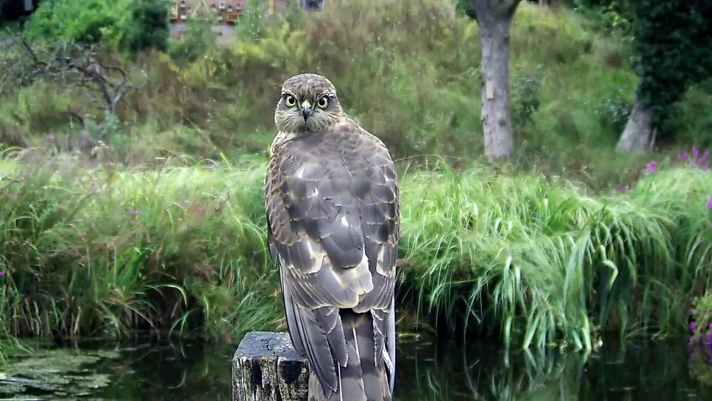 Kingfisher VIVOTEK 192.168.1.132 2015-09-02 18-48-49.660