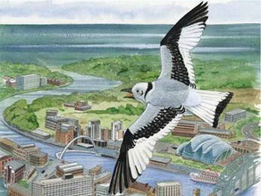 Kitty the Toon – A story about Gateshead Kittiwakes