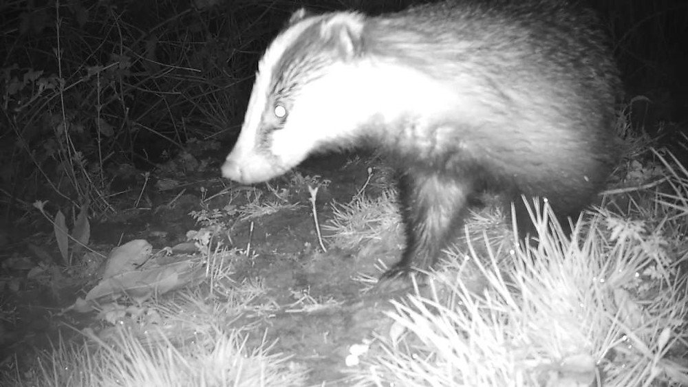 Badger Sett 2 (192.168.1.52) 2016-04-16 23-51-24.366