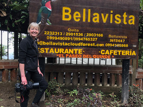 WildlifeKate in Ecuador: Day 4 –  Bellavista Cloud Forest Reserve