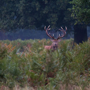 A Drizzly Morning in Bushy Park