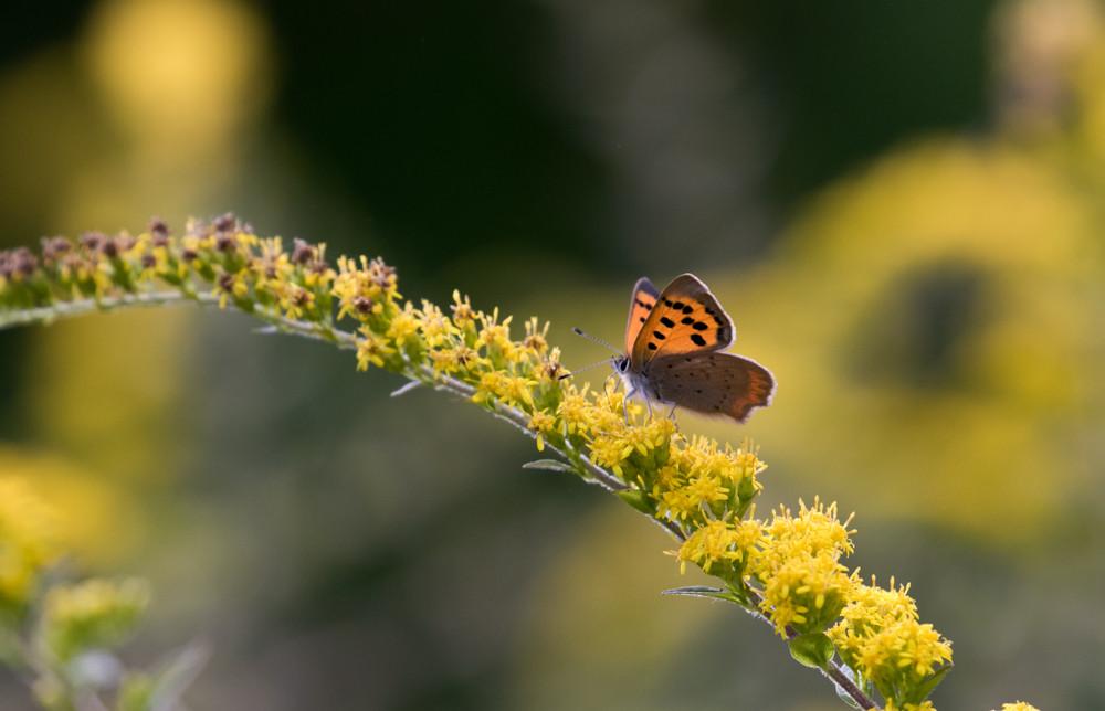 yv_butterflies-7835