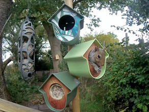 A New Feeding Station……… appreciated by the youngest squirrels!