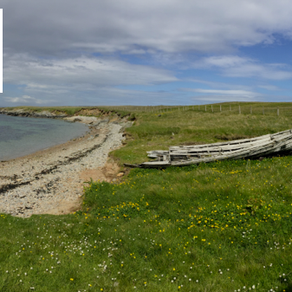 #30DaysWild – Day 22 Ultimate Shetland: Fetlar Phalaropes